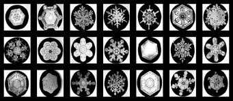 picture of snowflakes under a microscope